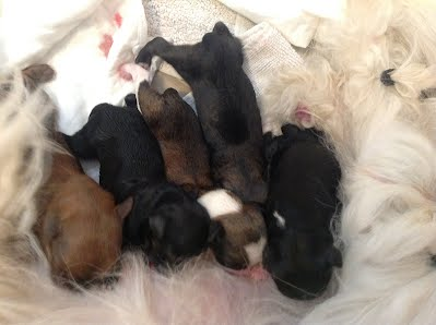 Puppies just born